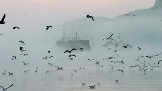 Россия снижает вывозные пошлины на отдельные виды рыбы