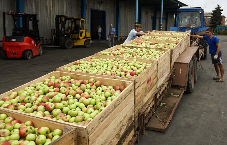 Россия с 21 сентября разрешит Молдавии поставки широкого ассортимента фруктов