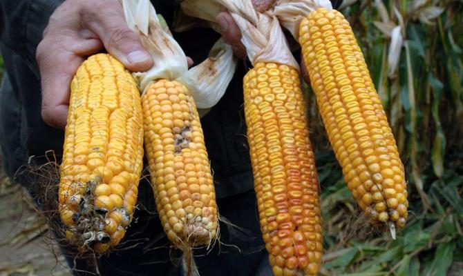 Аргентина готова увеличить поставки сои и кукурузы в Россию