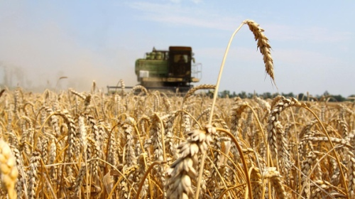 Россия заняла первое место в мире по экспорту пшеницы