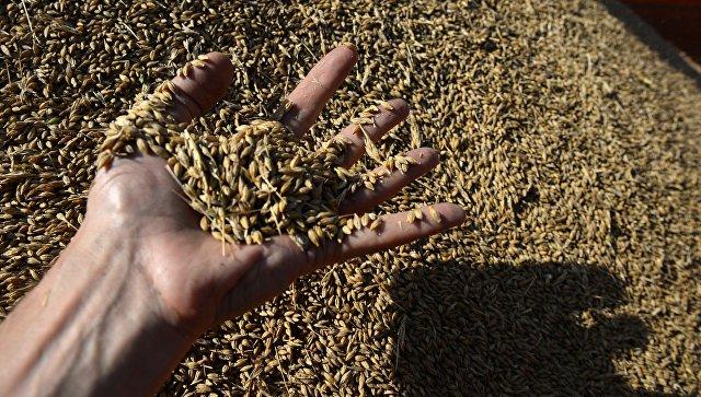 Россия готова кратно увеличить поставки зерна в Мексику