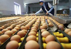 Россельхознадзор разъяснил постановление о запрете поставок яиц из стран ЕС