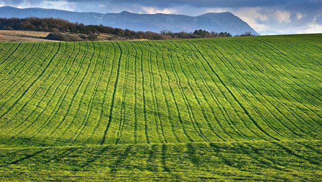 Крым предложит инвесторам более 10 новых площадок в аграрном секторе