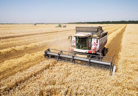 Рекордный урожай зерновых приведет к дефляции