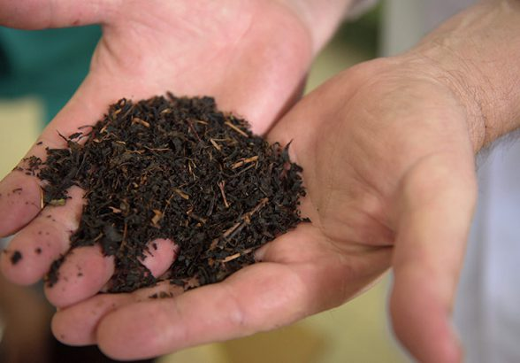 Россельхознадзор обсудит возобновление поставок цейлонского чая