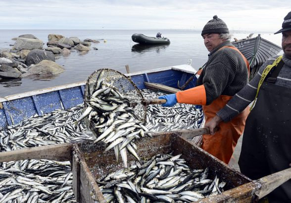 Эксперты ожидают роста доходов рыбаков в РФ при сохранении квот по историческому принципу
