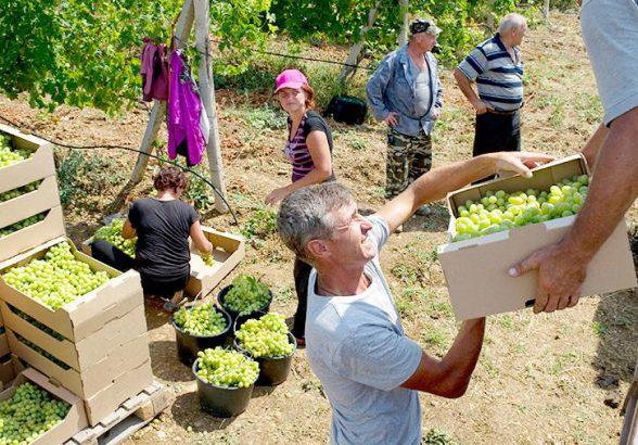 В Минфине выступили против специального сбора на импортные вина