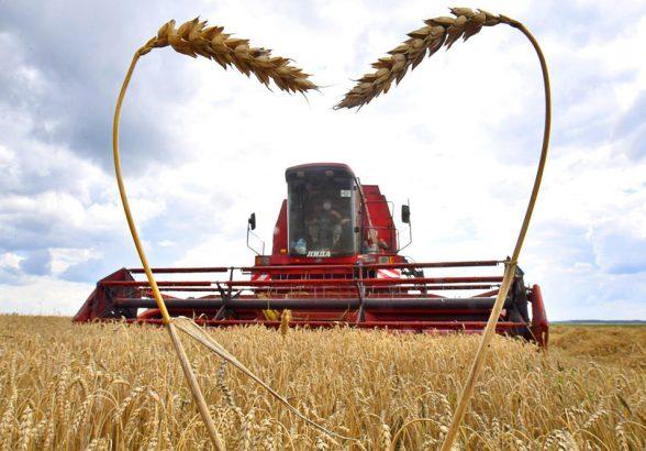 Как аномальная погода повлияет на урожай в России и в мире