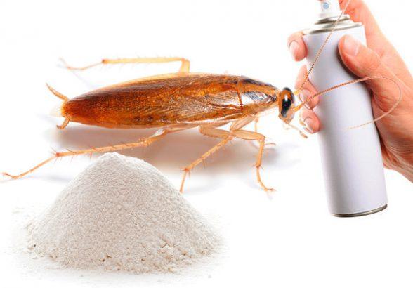 Какие стоит использовать средства от тараканов и клопов?