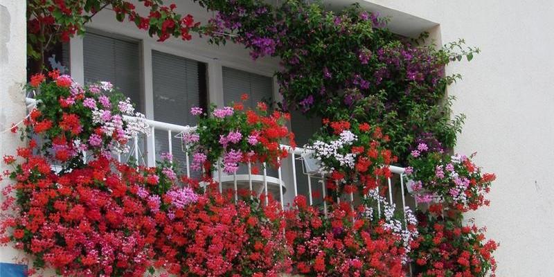 Затеняем и озеленяем балкон