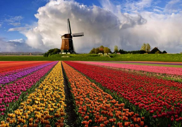 Особенности регистрации компании в Нидерландах