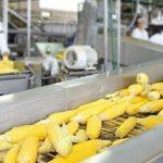 В Волгоградской области будет открыт один из крупнейших в мире заводов по переработке кукурузы