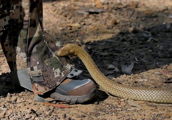 Змеи в походе. Как избежать встречи