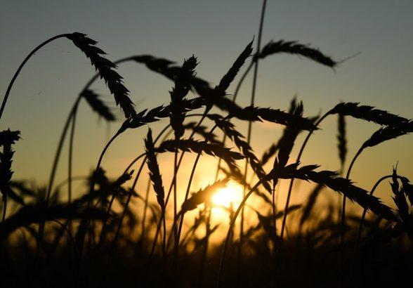 Минсельхоз США предсказал России лидерство в экспорте пшеницы
