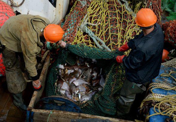 Экспорт российской рыбы вырастет на треть