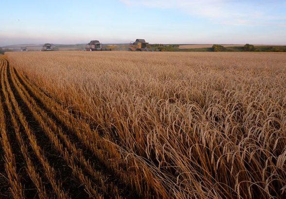 В «Русагротрансе» заявили о падении цен на пшеницу