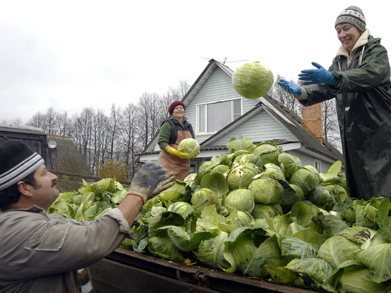 Россия оказалась не в состоянии убрать урожай без мигрантов