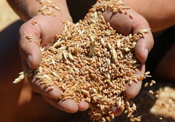 Путин заявил об ухудшении ситуации на мировом рынке продовольствия