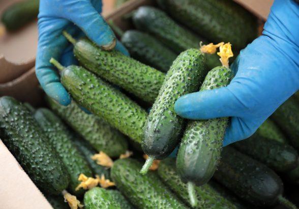 Продуктам с огорода выделят «первую линию» на рынках