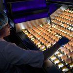 Абрамченко поручила разработать меры по импортозамещению инкубационного яйца