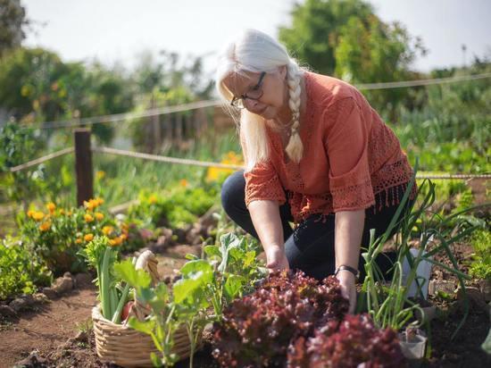 Дачникам назвали условия для оплаты налога от продажи овощей